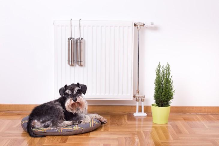 ideale luftfeuchtigkeit und optimales raumklima für tiere und menschen
