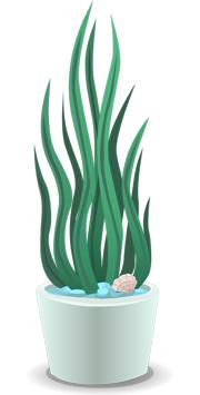 zimmerpflanzen geben feuchtigkeit ab